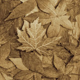 Leafs Royalty Free Stock Images