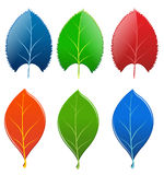 Leafs. Vector illustration representing two kinds of leafs in various colors and shapes Royalty Free Stock Photos