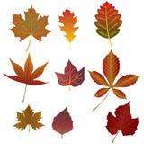 leafs Royaltyfri Bild
