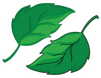 Leafs. Illustration of a green leafs Stock Images