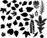 Leafs. A lot of leafs vector Stock Photo