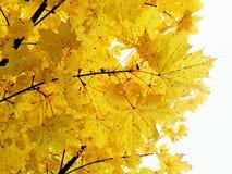 leafs Royaltyfria Bilder