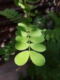 leafs Royaltyfri Foto