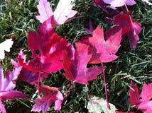 leafs Royaltyfri Fotografi