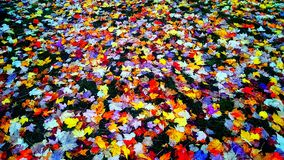 leafs Royaltyfria Foton