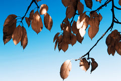 Leafs in autumn royalty free stock photos