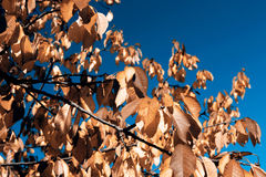 Leafs in autumn stock image