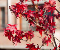 Leafs and Autumn Colors in the Forest Stock Photography