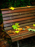 Leafs in Bench Royalty Free Stock Image