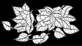 Leafs. Black and white illustration of leafs Stock Photography