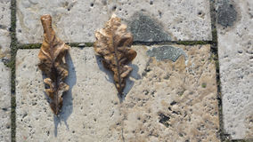 Leafs on brick. In Budapest Stock Photo