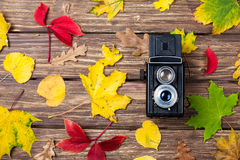 Leafs and camera Royalty Free Stock Images
