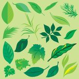 Leafs collection. Set of leafs and plants design elements stock illustration