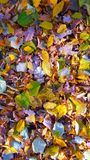 Leafs colors Royalty Free Stock Images
