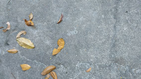 Leafs in a concrete floor. In gray, orange and yellow tones. Nostalgia mood Stock Photo