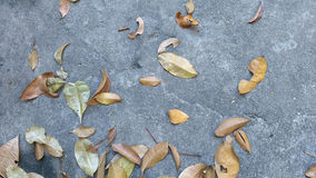 Leafs in a concrete floor. In gray, orange and yellow tones. Nostalgia mood Royalty Free Stock Images