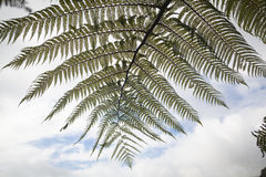 Leafs of Ferns Stock Photography