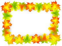 Leafs frame. Colored autumn leafs on the frame Royalty Free Stock Photos