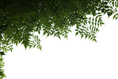 Leafs Frame. Background can be used as wallpaper or any design Royalty Free Stock Images