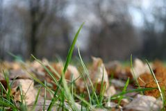 Leafs in grass royalty free stock photos