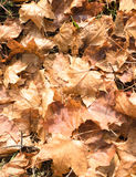 Leafs in the ground. Autumn leafs in the ground Royalty Free Stock Image
