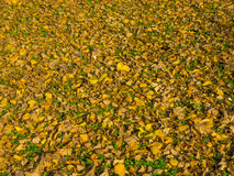 Leafs on the ground Royalty Free Stock Image