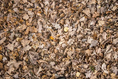 Leafs on the ground Stock Image