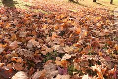 Leaves on the grown brown. Leafs on the grown, brown fall time of the year royalty free stock image
