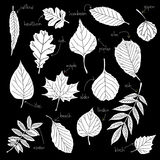 Leafs icons. Graphic leaves. 10 eps. illustration Royalty Free Stock Photos