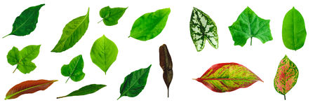 Free Leafs Isolated On White Background Stock Photo - 99134420