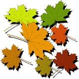 leafs klon ilustracji