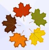 leafs klon Zdjęcia Royalty Free