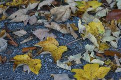 Leafs landed on the floor royalty free stock photos