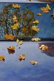 leafs mapels samochód Obrazy Royalty Free