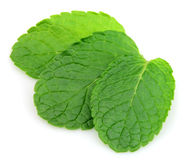 Leafs mint Royalty Free Stock Images