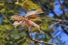 leafs nowy Zdjęcia Royalty Free