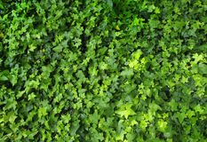 Leafs Pattern. Pattern of green little plants Royalty Free Stock Images