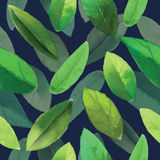 Leafs pattern. For using in different spheres Stock Photography