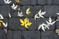 Leafs on the Paving slabs Royalty Free Stock Photos
