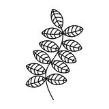Leafs plant decorative icon Royalty Free Stock Photography
