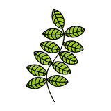 Leafs plant decorative icon Royalty Free Stock Photo