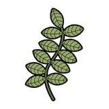 Leafs plant decorative icon Stock Image