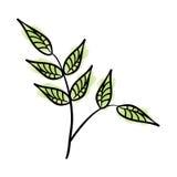 Leafs plant decorative icon Stock Photos