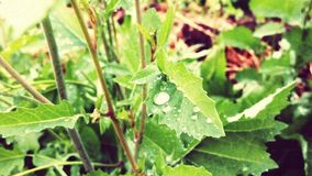 Leafs. Rainy weather in faild and cool Stock Photography