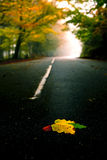 Leafs on the road Royalty Free Stock Photography