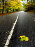 Leafs on the road Stock Photo