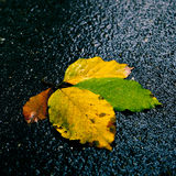 Leafs on the road Royalty Free Stock Images