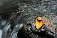 Leafs on a rock. Near the river Royalty Free Stock Image