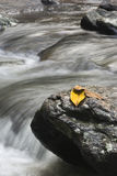 Leafs and rock. Leafs on a rock with water spring Stock Images