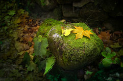 Leafs on Rock. Idyllic autumn scene with fallen leafs on a rock in a park Royalty Free Stock Photography